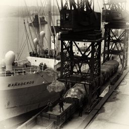 Dock workers unloading over the docks